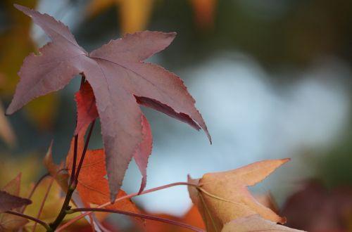 fall leaves fall foliage fall color