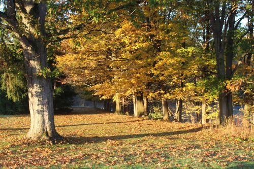 fall scene trees fall