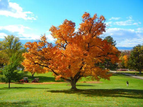fall trees autumn nature