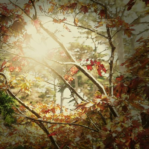 Fall Trees Sunburst