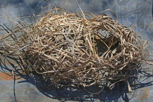lizdas, paukščiai, kritęs, senas, nenaudojamas, pinti nukritusių paukščių lizdas