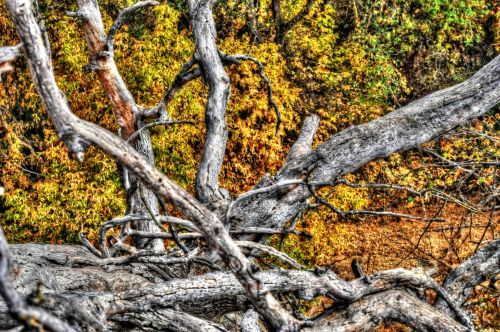 Fallen Dead Tree Branches