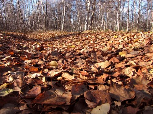 fallen leaves autumn foliage autumn
