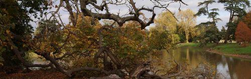 kritęs medis,bagažinė,gamta