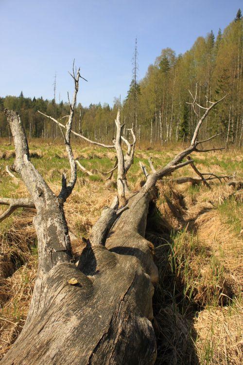 fallen tree dry wood forest