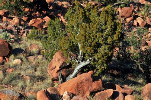 Fallen Tree Among Desert Rocks