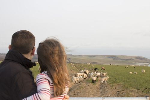 family father and daughter sheep