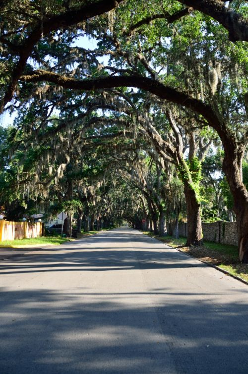 Famous Magnolia Street