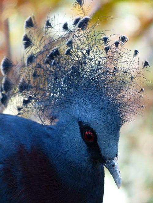 fan-deaf bird spring jewelry