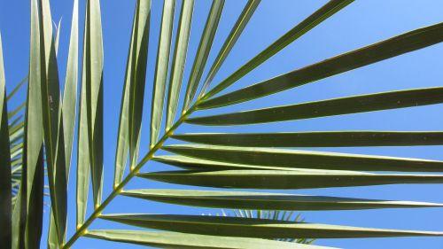 fan palm leaves sky