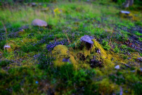 fantasy forest glade