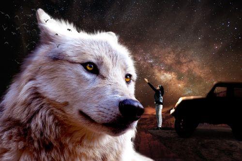 fantazija,Jeep,fėja,vilkas,Jeep Wrangler,kosmosas,naktinis dangus,pasiekti