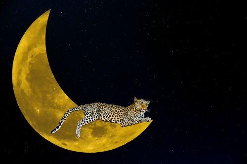 fantasy moon leopard