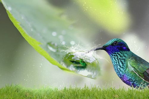fantasy  hummingbird  nature