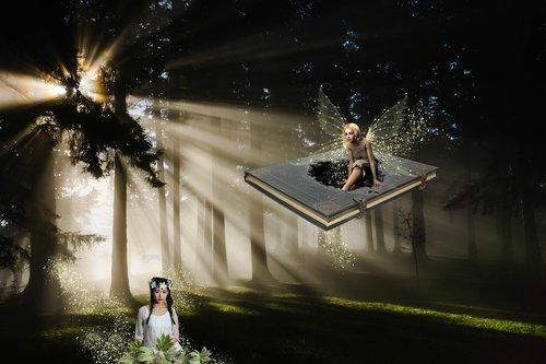 fantasy  forest  light