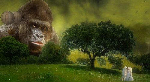 fantasy  gorilla  composing