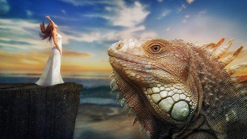 fantasy  dragon  iguana