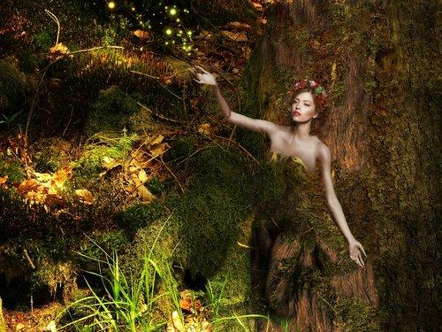 fantasy  forest  fee