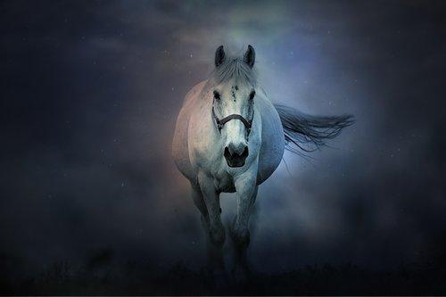 fantasy  horse  animals