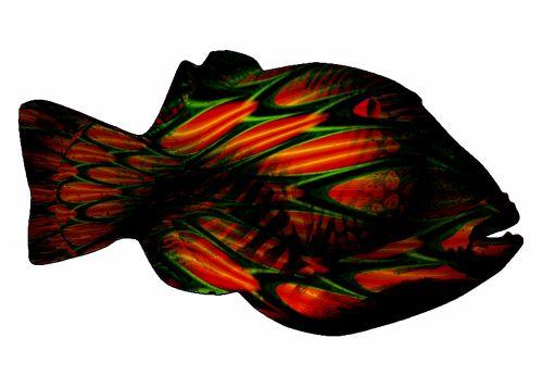 Fantasy Op-Art Trigger Fish