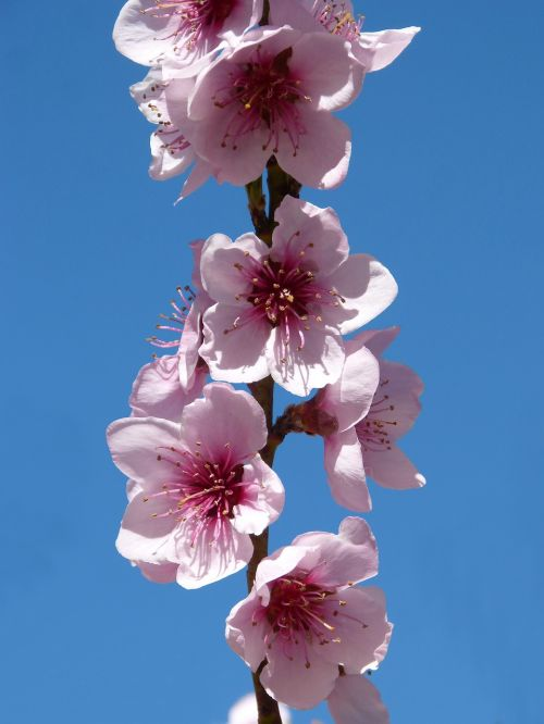 fárbol fruity flowering tree flowery branch