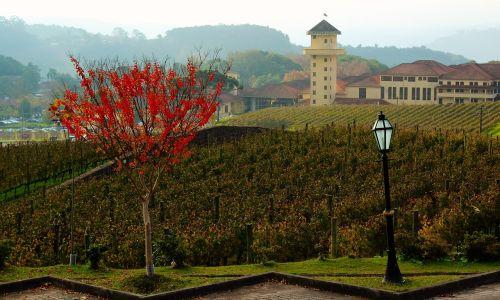 farm winery flying