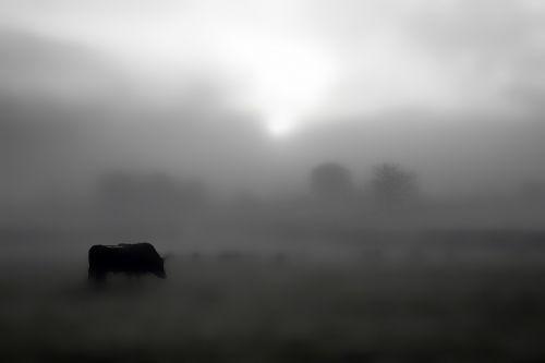 farm countryside field