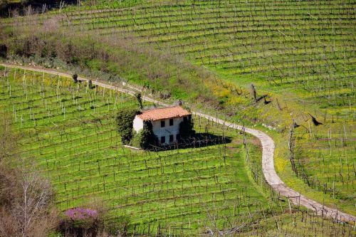 ūkis, laukas, gamta, vynuogynas, kraštovaizdis, kelias, be honoraro mokesčio