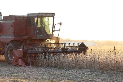 farm  soybean  harvest