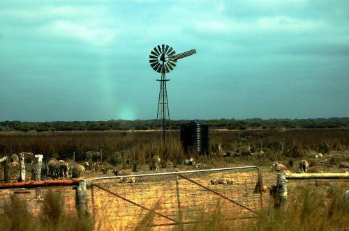 farm pinwheel australia