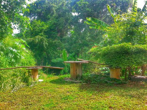 farm tree puerto rico
