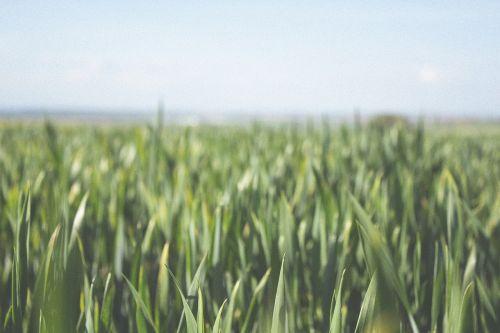 farm fields crops