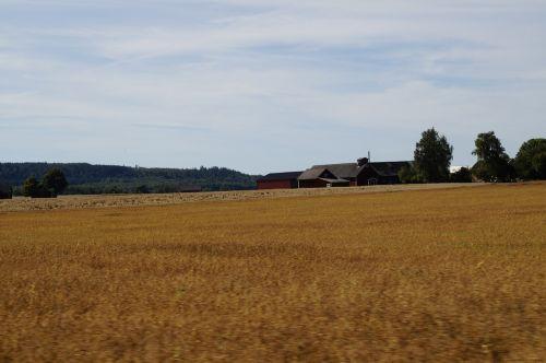 farm cornfield golden yellow