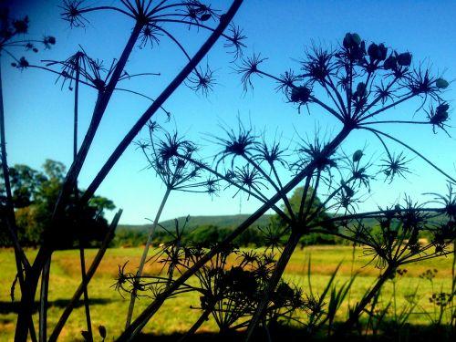 farm silhouette nature