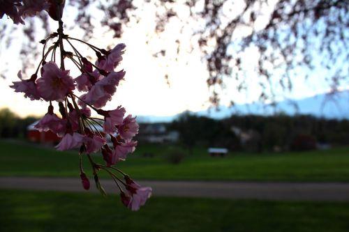farm country springtime landscape