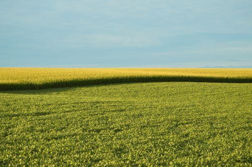 farm field field farm