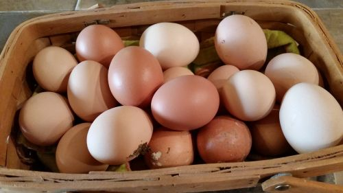 farm fresh eggs farm fresh eggs