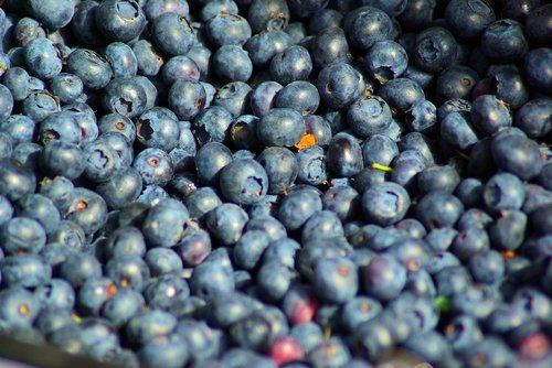farm market blueberries  farm  market