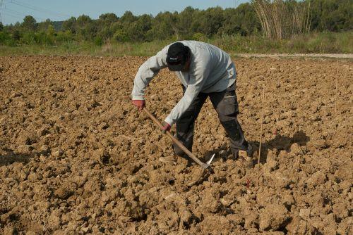 farmer plantation manual work