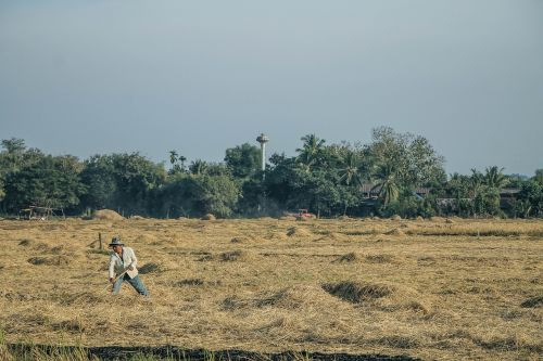 farmer agricultural harvest