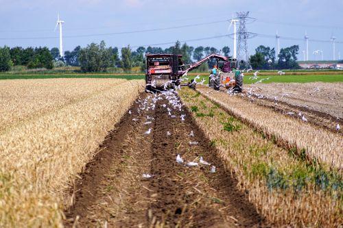 farmer tractor seagulls