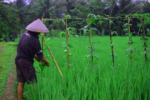 farmer  father  village