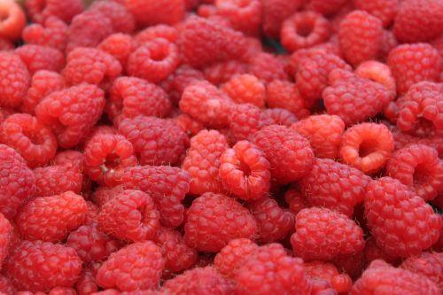 Farmers Market Red Raspberries