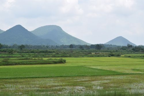 farming indian odisha