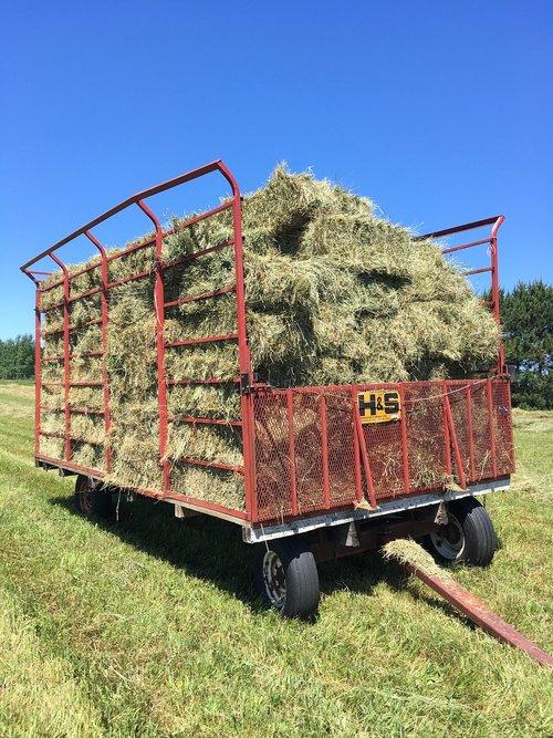 farming  hay making  farm