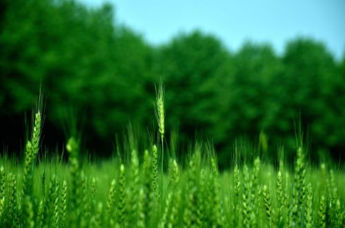 farmland agriculture every day