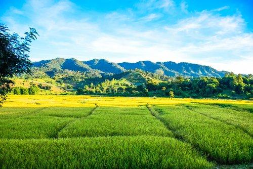 farmland  land  field