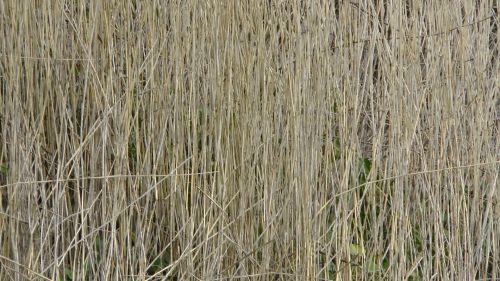 Farmyard Field Background