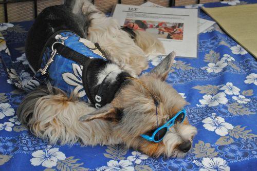fashionable dog carlsbad california