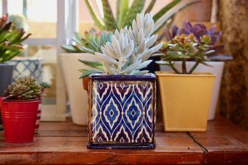 fat plants terracotta pots ceramic vases